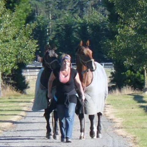 Horses being led