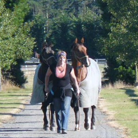 Horses being led